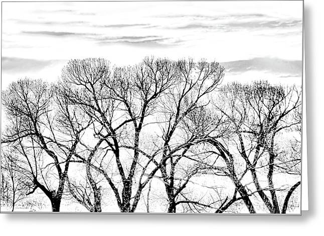 Greeting Card featuring the photograph Trees Silhouette Black And White by Jennie Marie Schell