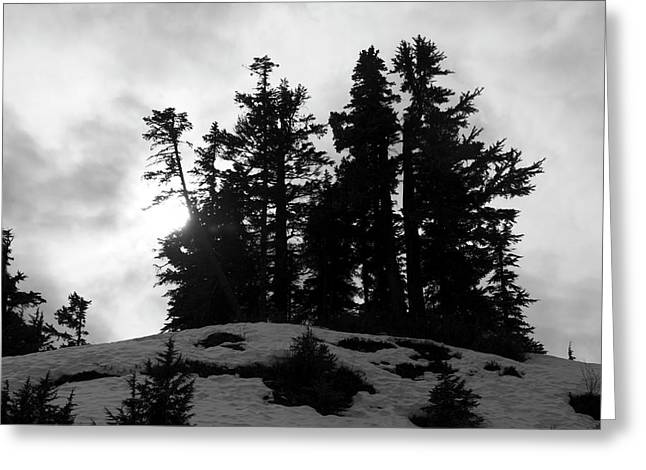 Trees Silhouettes Greeting Card