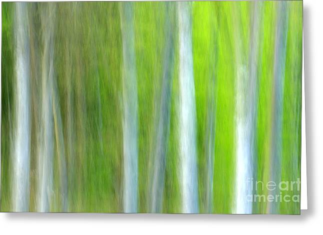 Trees Greeting Card by Silke Magino