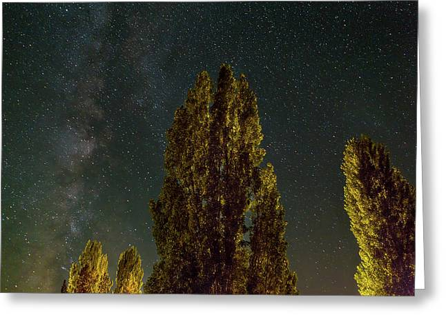 Trees Under The Milky Way On A Starry Night Greeting Card