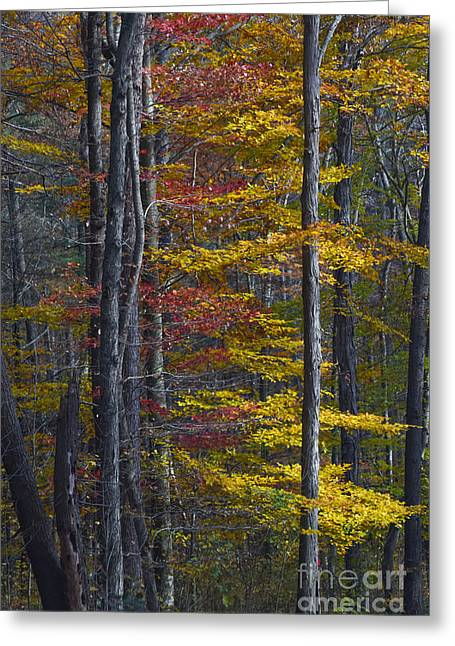 Trees With Autumn Colors 8260c Greeting Card