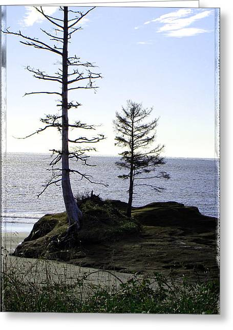 Trees With Character Greeting Card by Beverly Guilliams