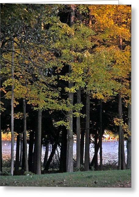 Treestand By Onota Lake Greeting Card by Jess Kielman