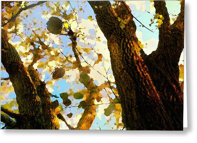 Treetop Abstract-look Up A Tree Greeting Card