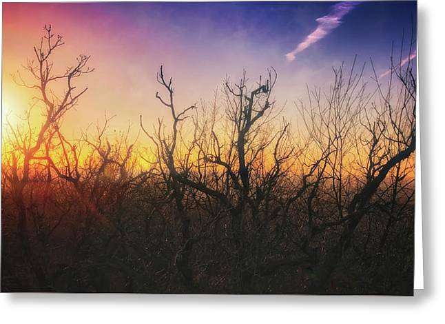 Treetop Silhouette - Sunset At Lapham Peak #1 Greeting Card by Jennifer Rondinelli Reilly - Fine Art Photography