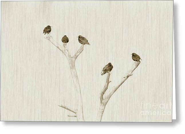 Treetop Starlings Greeting Card by Benanne Stiens