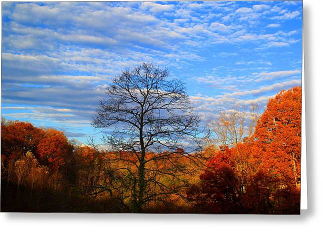 Greeting Card featuring the photograph Treetops Sunrise by Kathryn Meyer