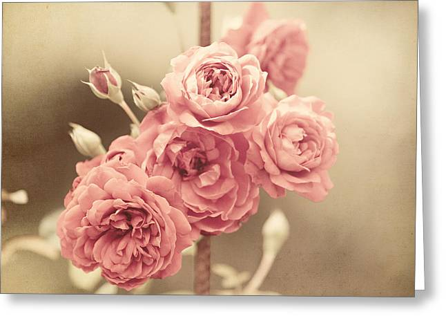 Trellis Roses Greeting Card by Lisa Russo