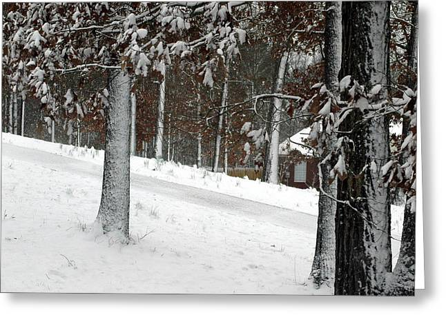 Tress Of Snow Greeting Card by Lynn Reid
