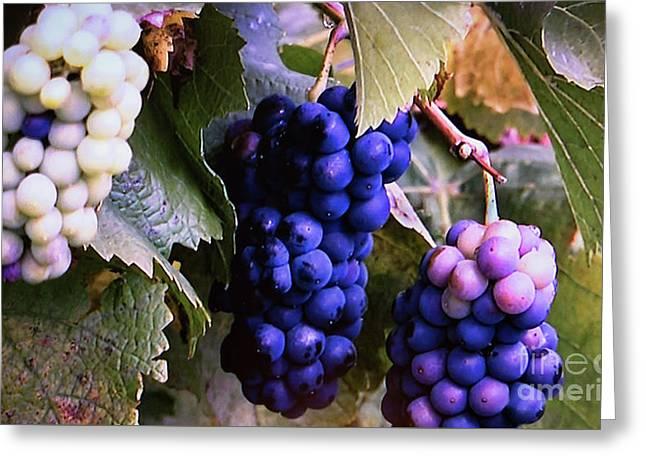 Tri-color Grapes Greeting Card by Linda Phelps