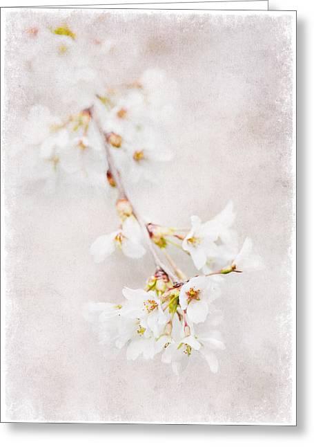 Triadelphia Cherry Blossoms Greeting Card