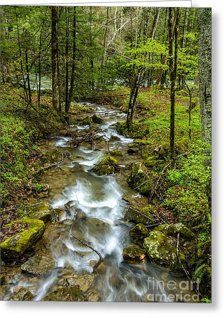 Tributary Back Fork Of Elk River Greeting Card by Thomas R Fletcher