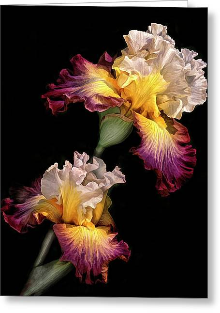Tricolor Iris Pair Greeting Card