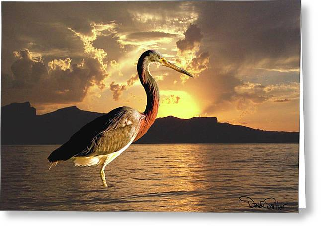 Tricolored Heron Greeting Cards - Tricolored Heron at Sunset Greeting Card by David Salter