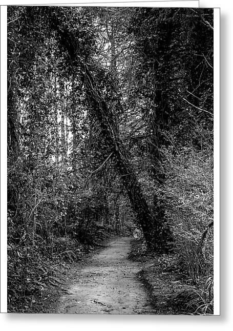 Trilha--bosque Do Silencio-campos Do Jordao-sp Greeting Card