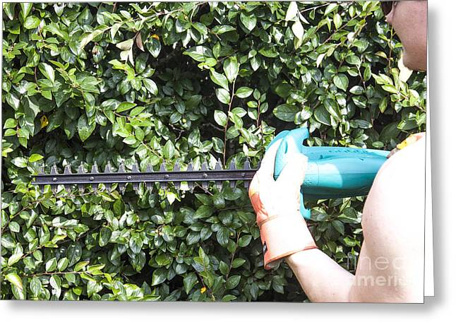 Trimming A Bush Greeting Card by D R
