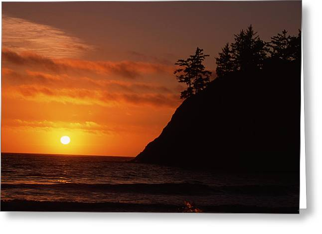 Trinidad Greeting Card by Soli Deo Gloria Wilderness And Wildlife Photography