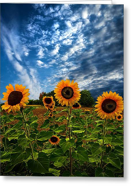 Field. Cloud Greeting Cards - Trinity Greeting Card by Phil Koch