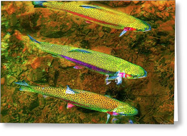 Trio Of Rainbow Trout Greeting Card