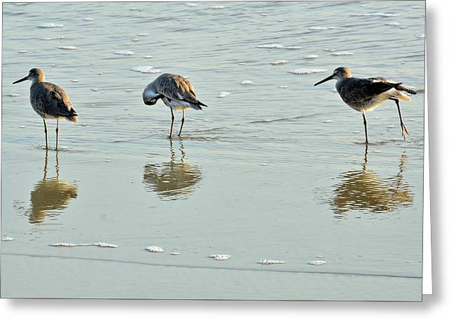 Trio Of Willets On Jekyll Greeting Card by Bruce Gourley