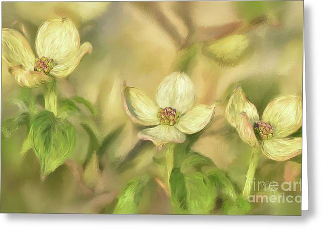 Triple Dogwood Blossoms In Evening Light Greeting Card by Lois Bryan