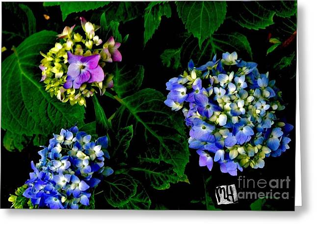 Triple Hydrangia In Spring Greeting Card by Marsha Heiken