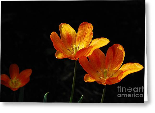Recently Sold -  - Sunlight On Flowers Greeting Cards - Triples Greeting Card by Lois Bryan