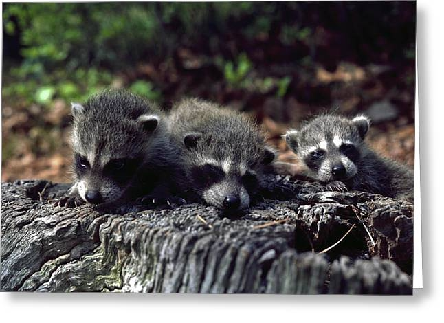 Greeting Card featuring the photograph Triplets by Sally Weigand