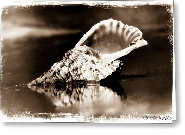 Triton's Trumpet Seashell Sepia Greeting Card by Elizabeth Abbott