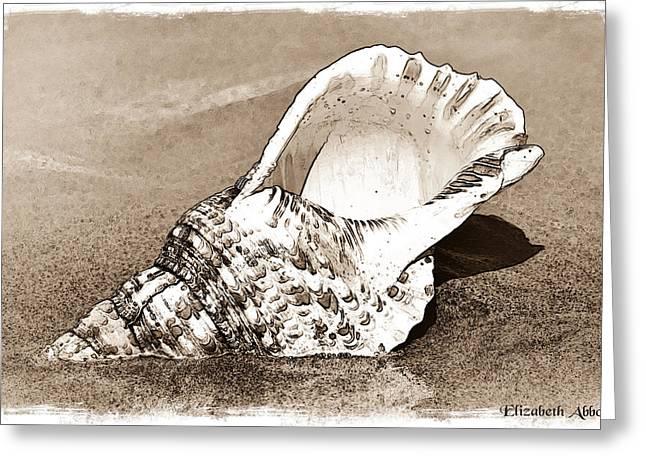 Triton's Trumpet Seashell Sepia Sketch Greeting Card by Elizabeth Abbott