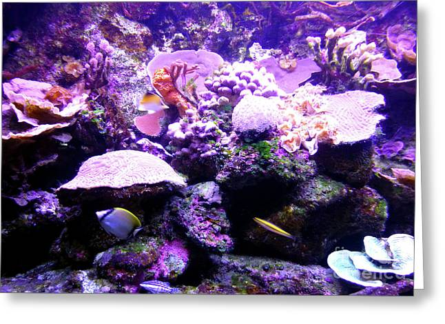 Greeting Card featuring the photograph Tropical Aquarium by Francesca Mackenney