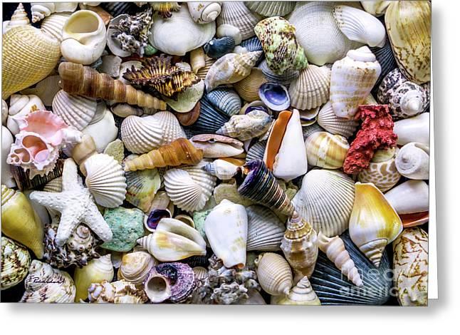 Tropical Beach Seashell Treasures 1500a Greeting Card