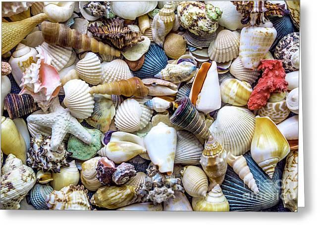 Tropical Beach Seashell Treasures 1529b Greeting Card