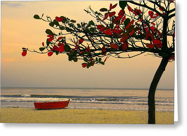 Greeting Card featuring the photograph Tropical Beach Sunset by Kim Wilson