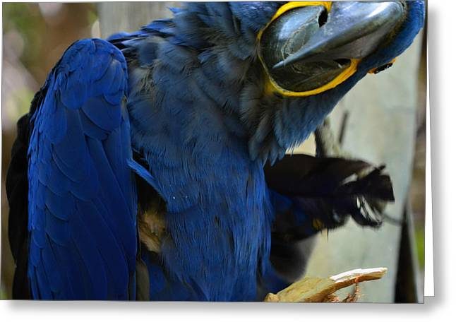 Tropical Bird- Maccaw Greeting Card by See My  Photos