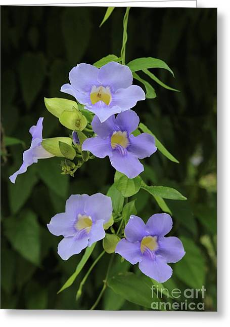 Tropical Blue Flowers Greeting Card by Carol Groenen
