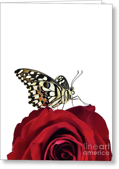 Tropical Butterfly On Red Rose Greeting Card