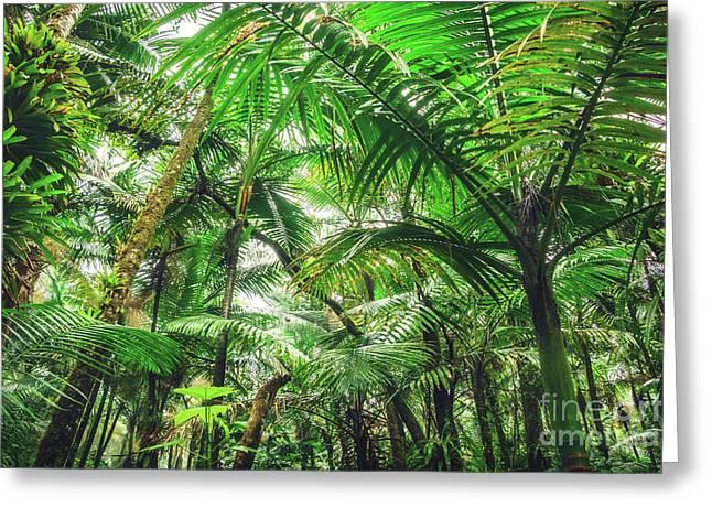 Tropical Canopy Greeting Card by Joan McCool