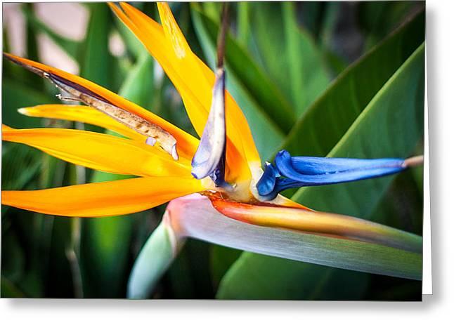 Tropical Closeup Greeting Card