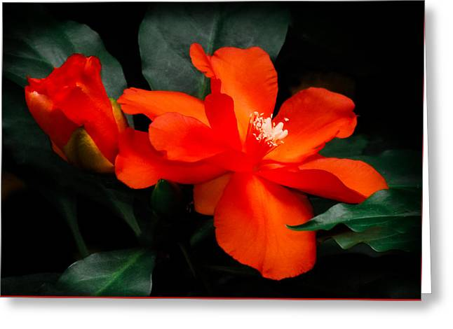 Tropical Elegance Greeting Card by Karen Wiles