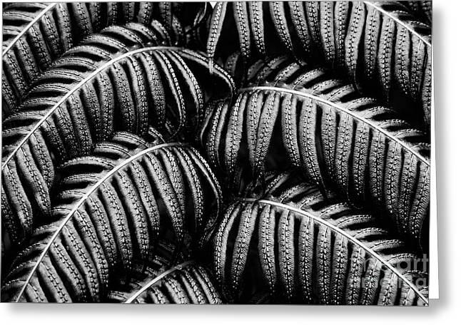 Tropical Fern Black White Greeting Card
