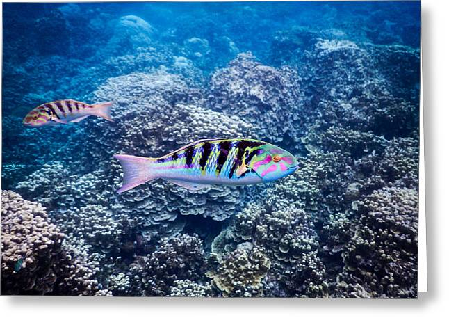 Tropical Fish Bay Greeting Card by Michael Scott