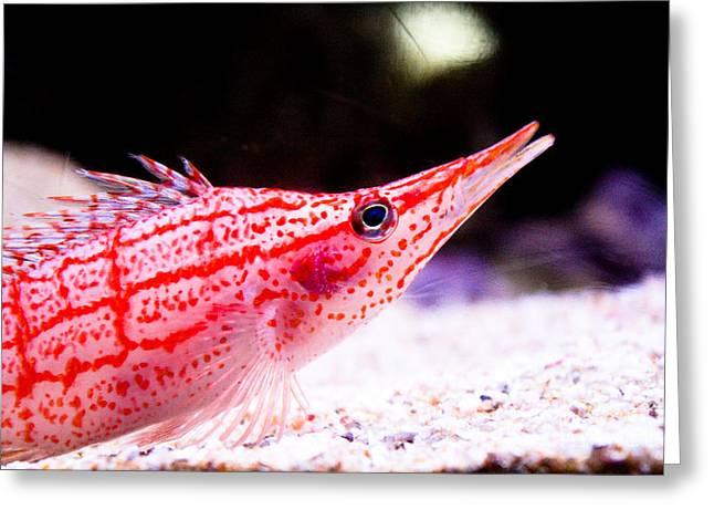 Tropical Fish Greeting Card by Brenton Woodruff