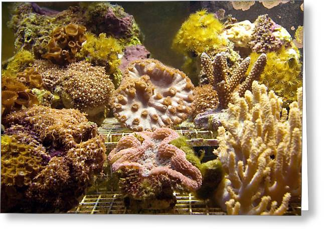 Tropical Fish Tank 10 Greeting Card by Steve Ohlsen