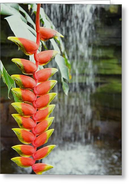 Tropical Flower Heliconia Greeting Card by Art Spectrum