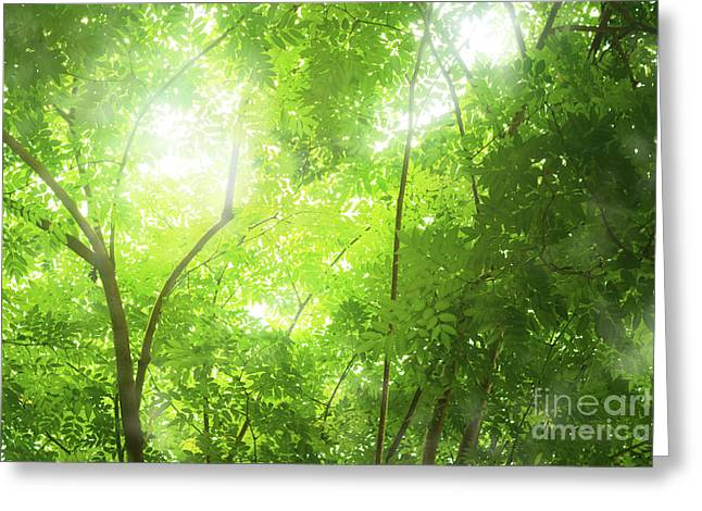 Tropical Forest Greeting Card by Atiketta Sangasaeng
