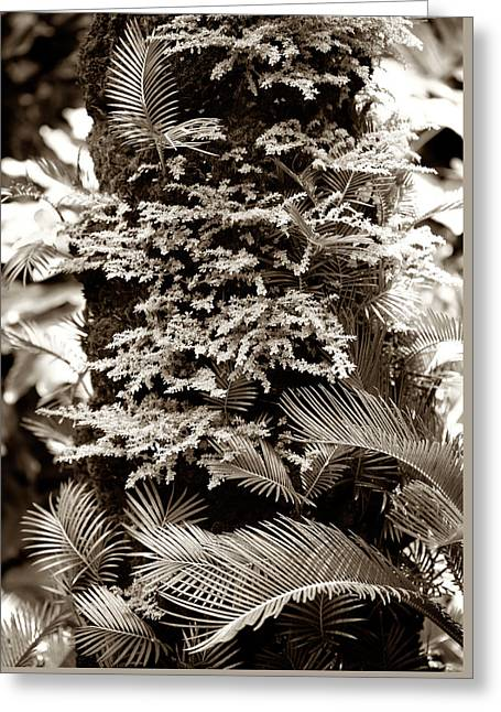 Tropical Forest Greeting Card by Marilyn Hunt