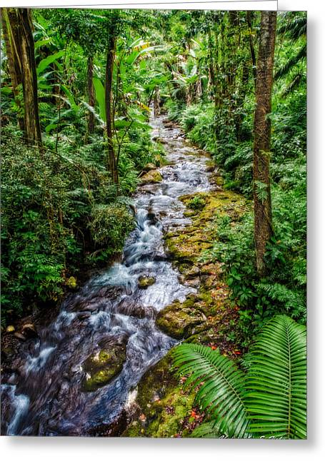 Tropical Forest Stream Greeting Card by Christopher Holmes