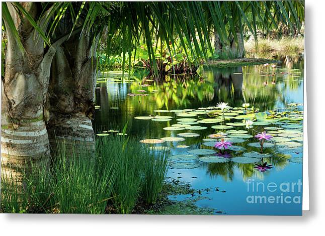 Tropical Garden Pond Greeting Card