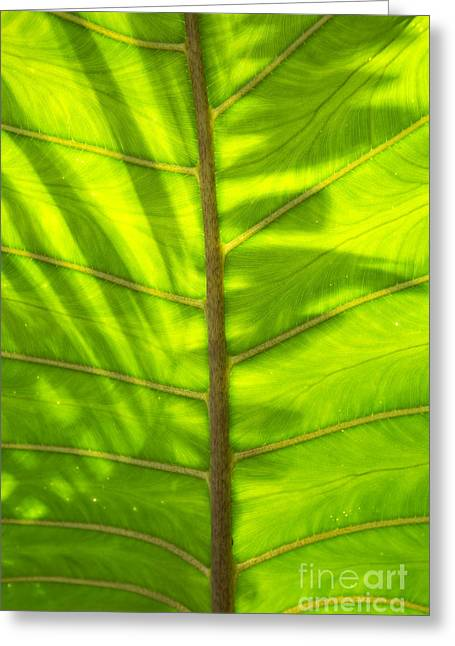 Tropical Green Leaf Texture Greeting Card